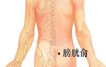 膀胱俞的定位及主治 最简便方法找膀胱俞