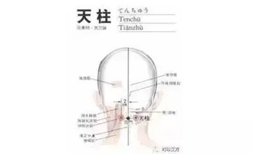 天柱的准确位置图作用 天柱的准确位置图片及功效