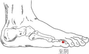 至阴的位置图 至阴的位置作用及功效